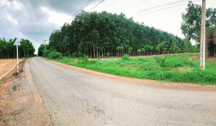 Đất nằm ngay khu dân cư hiện hữu, thích hợp kinh doanh đa ngành nghề