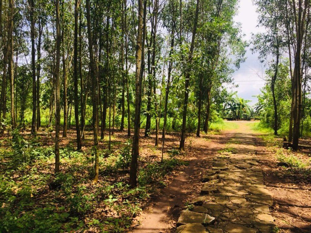 Bán đất ngay mặt tiền đường xã Phước Bình, Long Thành