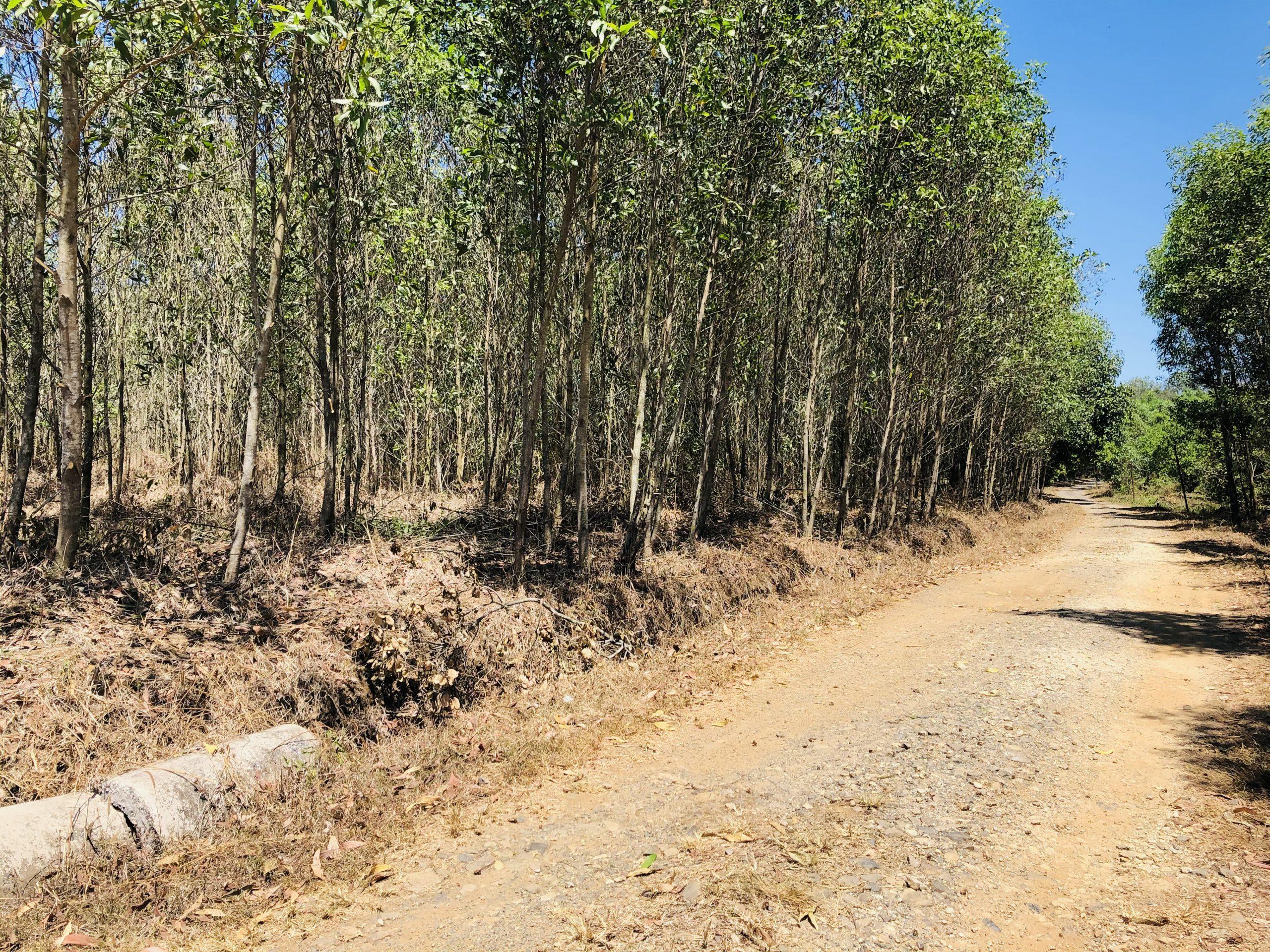 Đất nền liền kề mặt tiền đường Phước Bình